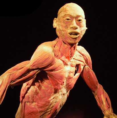 Bodies - The Exhibition
