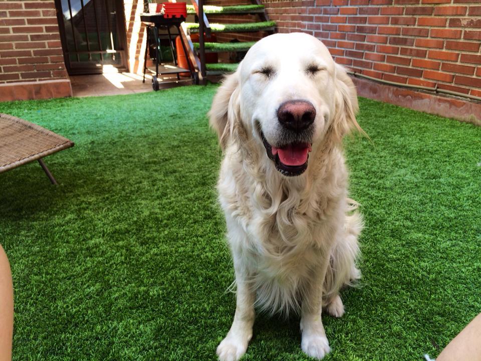 perro-feliz-alma
